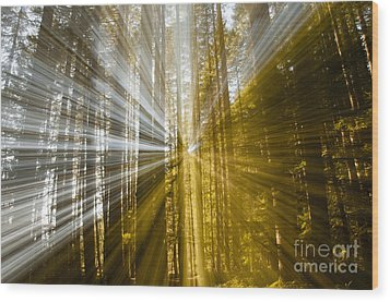 Forest Abstract Wood Print by Vivian Christopher