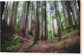 Wood Print featuring the photograph Forest by Adria Trail