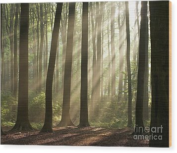 Forest Wood Print by Boon Mee