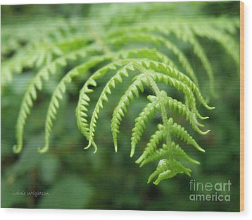 Forest Fern Wood Print by Lainie Wrightson