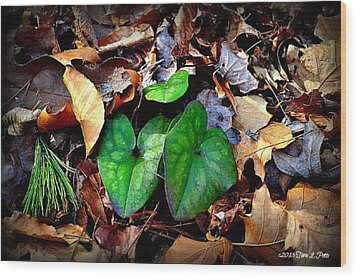 Wood Print featuring the photograph Forest Flora by Tara Potts