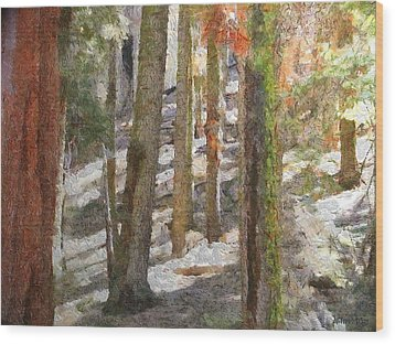 Forest For The Trees Wood Print by Jeff Kolker