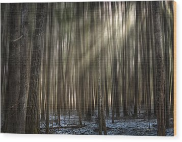 Forest Glow Wood Print by Gary Smith