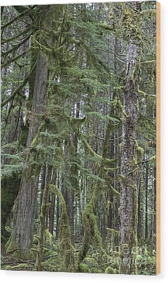 Forest Green  Wood Print by Tim Rice