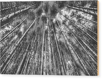 Forest Guards Wood Print by Dawn J Benko