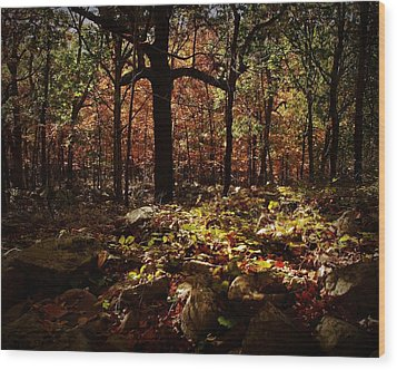 Forest Illuminated Wood Print by Linda Unger