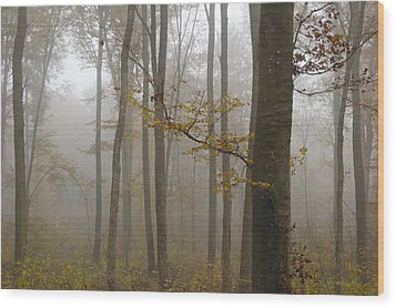 Forest In Autumn Wood Print by Matthias Hauser