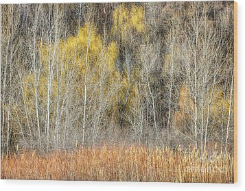 Forest In Late Fall At Scarborough Bluffs Wood Print by Elena Elisseeva