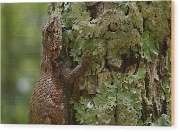 Forest Lizard 2 Wood Print