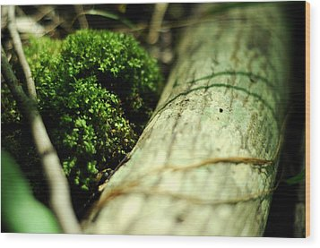 Wood Print featuring the photograph Forest Love by Rebecca Sherman
