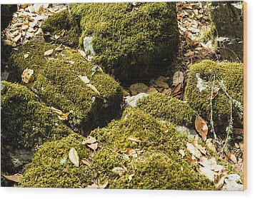 Forest Moss Wood Print by Suzanne Luft