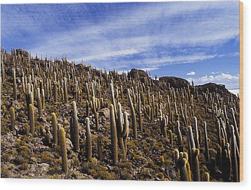 Wood Print featuring the photograph Forest Of Cacti by Lana Enderle
