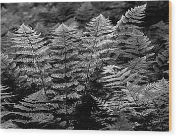 Wood Print featuring the  Forest Of Ferns by Haren Images- Kriss Haren