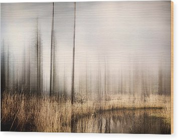 Forest Of Maine Wood Print by Gary Smith