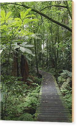 Forest Path Wood Print by Les Cunliffe