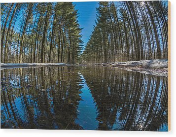 Forest Reflections Wood Print