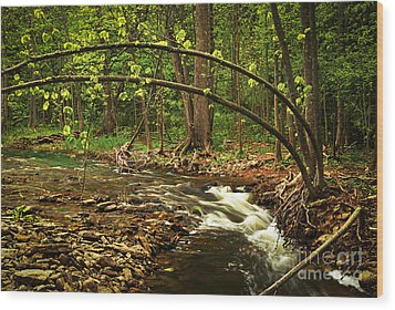 Forest River Wood Print by Elena Elisseeva