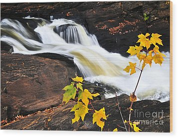 Forest River In The Fall Wood Print by Elena Elisseeva