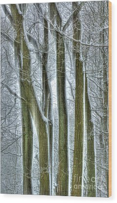 Forest Sentinels Wood Print by David Birchall