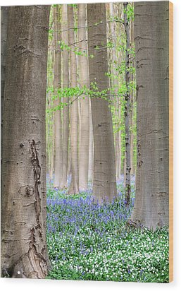 Forest Spring Flowers  Wood Print
