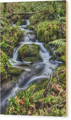 Forest Stream V2 Wood Print by Ian Mitchell