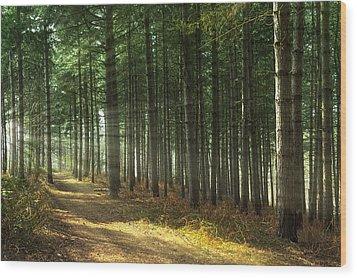 Forest Sun Rays Wood Print by Svetlana Sewell