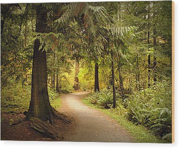 Forest Trail Wood Print by Brian Chase