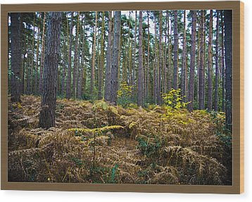 Wood Print featuring the photograph Forest Trees by Maj Seda