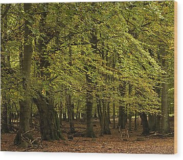 Wood Print featuring the photograph Forest Visitor by Inge Riis McDonald