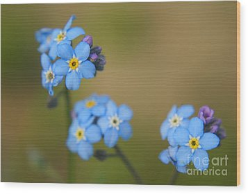 Forget Me Not 01 - S01r Wood Print by Variance Collections