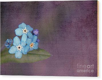 Forget Me Not 02 - S0304bt02b Wood Print by Variance Collections