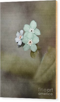 Forget Me Not 03 - S07bt07 Wood Print by Variance Collections