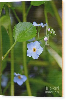 Forget Me Not Wood Print by John Chatterley