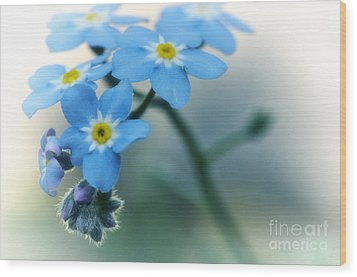 Forget Me Not Wood Print by Simona Ghidini