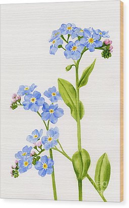Forget-me-nots On White Wood Print by Sharon Freeman