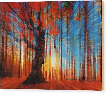 Forrest And Light Wood Print by Tony Rubino