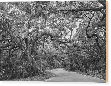 Fort Clinch Live Oaks Wood Print by Dawna  Moore Photography
