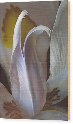 Fortnight Lily Composition No 3 Wood Print by Ben and Raisa Gertsberg