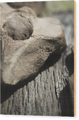 Wood Print featuring the photograph Fossil Bone With Weathered Wood by Rebecca Sherman