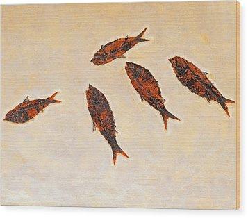 Fossilized Fishbritish Columbia Canada Wood Print by Thomas Kitchin & Victoria Hurst
