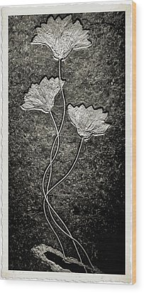 Fossilized Flowers Wood Print by Dan Sproul