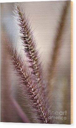 Fountain Grass Wood Print by Deb Halloran
