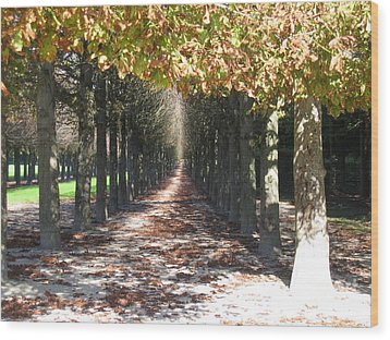 Fountainebleau - Under The Trees Wood Print by HEVi FineArt