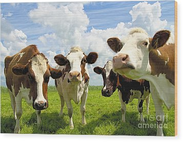 Four Chatting Cows Wood Print