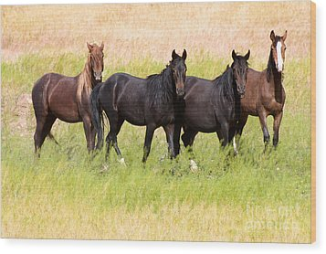 Four Friends Wood Print by Vinnie Oakes