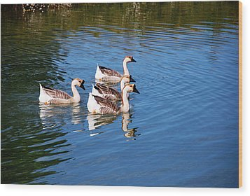 Wood Print featuring the photograph Four Geese A Swimming by Linda Segerson