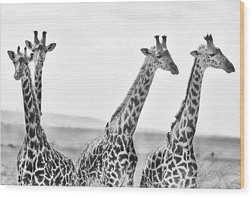 Four Giraffes Wood Print by Adam Romanowicz