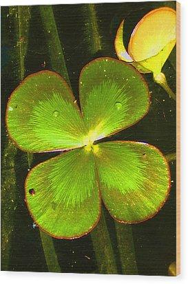 Four Leafed Clover Wood Print