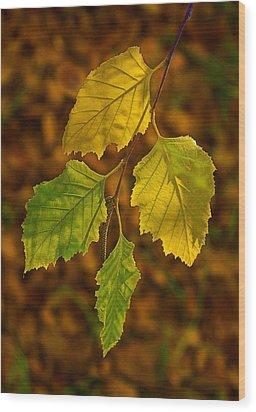 Four Leaves In Light Wood Print by Viktor Savchenko