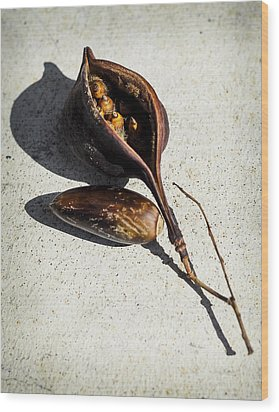 Four Seeds In A Pod Wood Print by Camille Lopez
